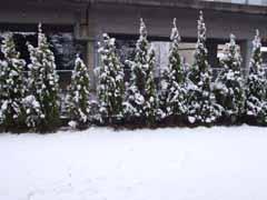 April snow.JPG